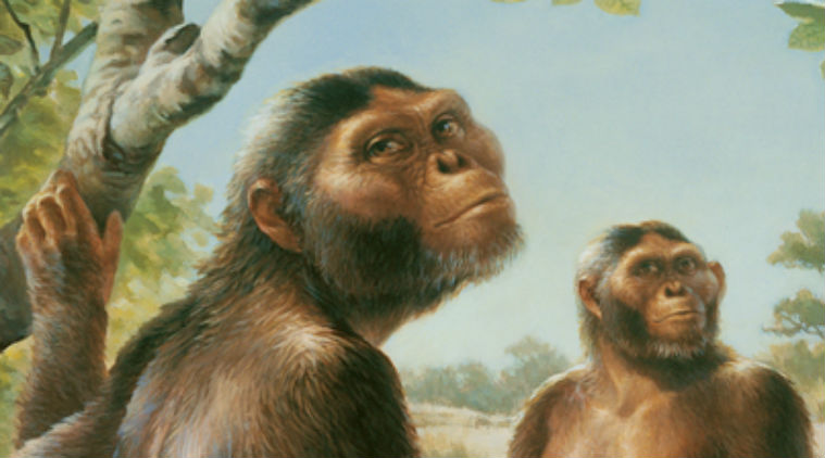 a study of the australopithecus Immediately download the australopithecus summary, chapter-by-chapter analysis, book notes, essays, quotes, character descriptions, lesson plans, and more - everything you need for studying or teaching australopithecus.