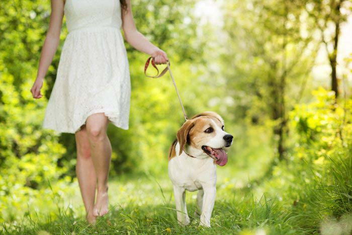 Humans and dogs both need to indulge in certain activity for their physical and mental stimulation (File Photo)