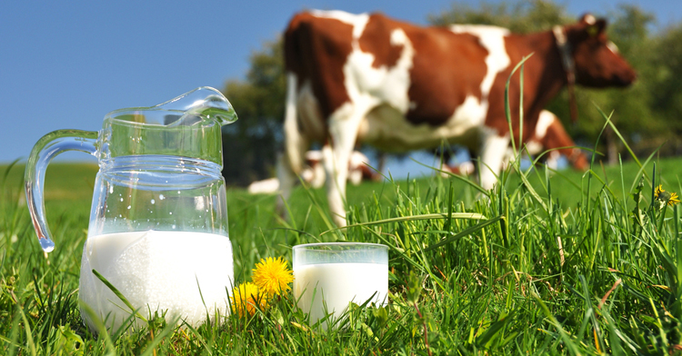 Avoiding cow's milk does not prevent type 1 diabetes in children