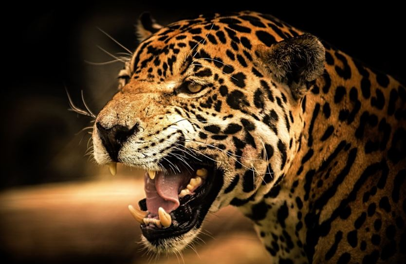 Leopard kills 8-yr-old in UP