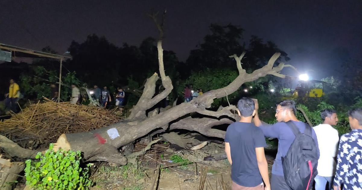 Tree cutting under way in Mumbai's Aarey Colony