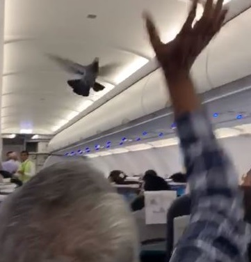 Two pigeons were spotted by passengers in a GoAir flight