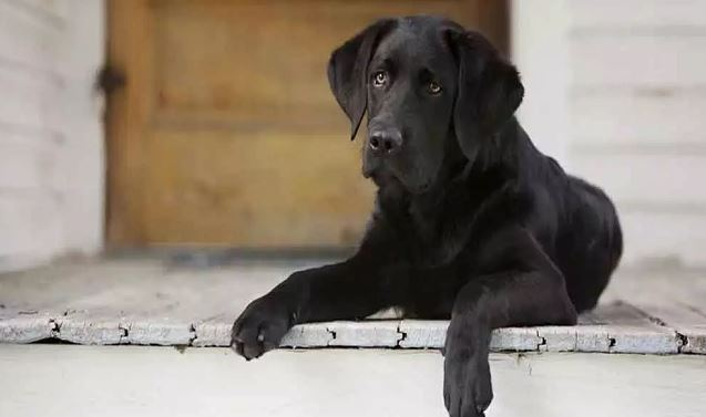 Army officer dies trying to save his dog from fire (Representational Image)