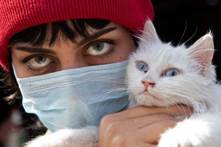 Pet owner precautions: Cats with no symptoms spread virus to other cats