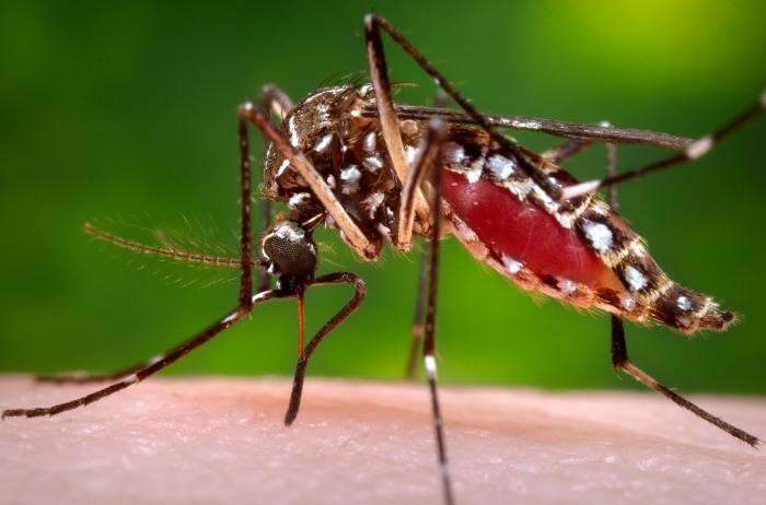 Dengue patients are admitted in hospitals (File Photo)